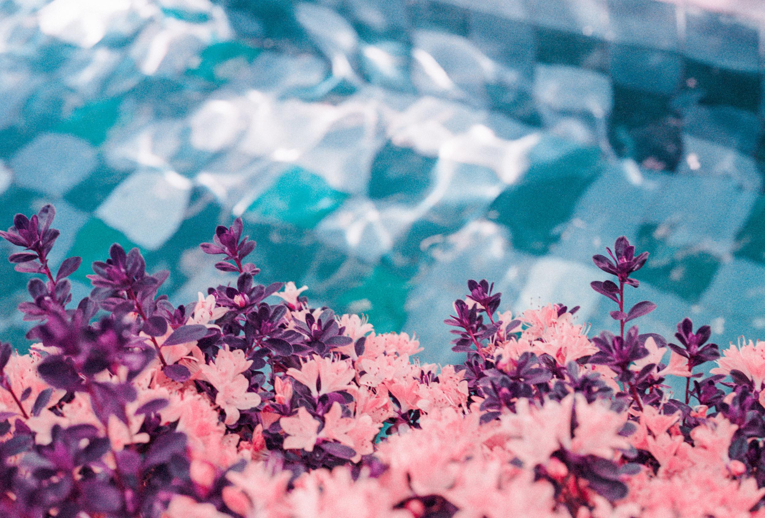 Flowers Dream of Water