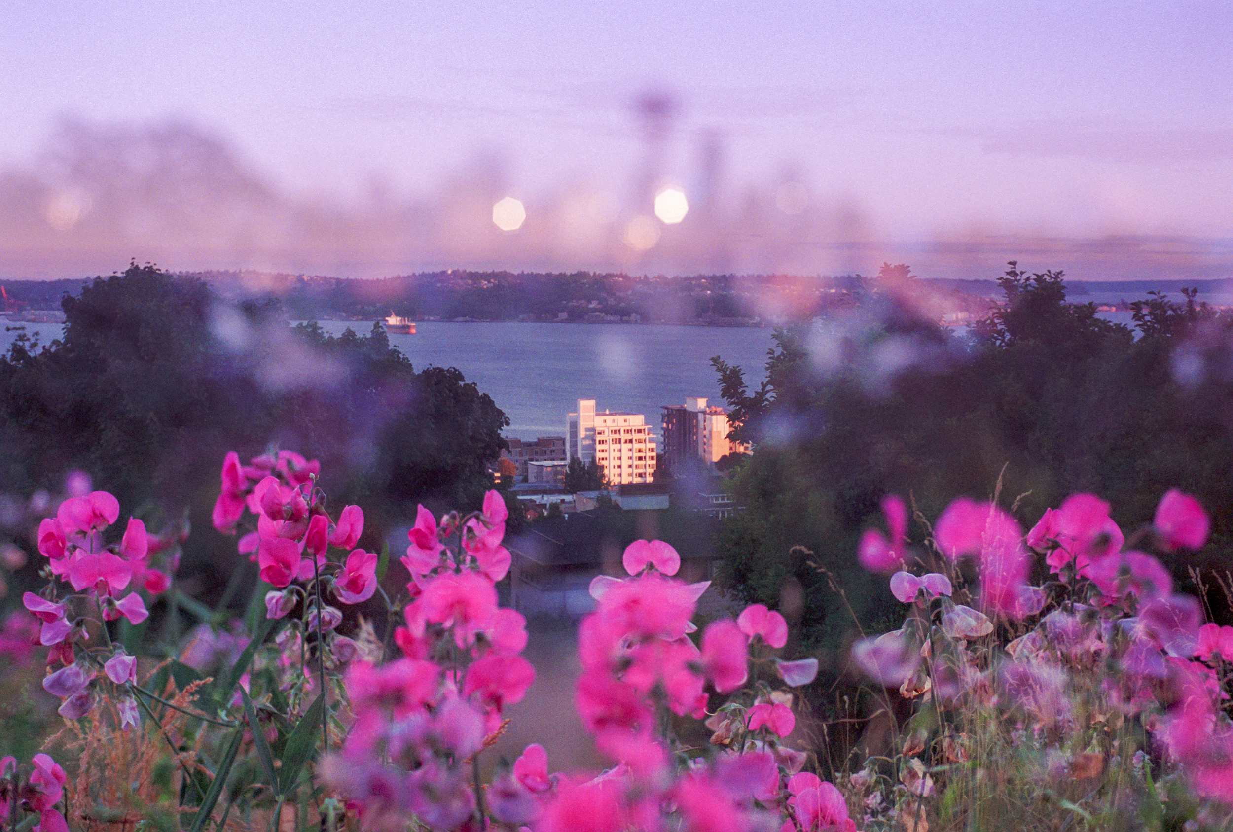Pink Nights at Kerry Park