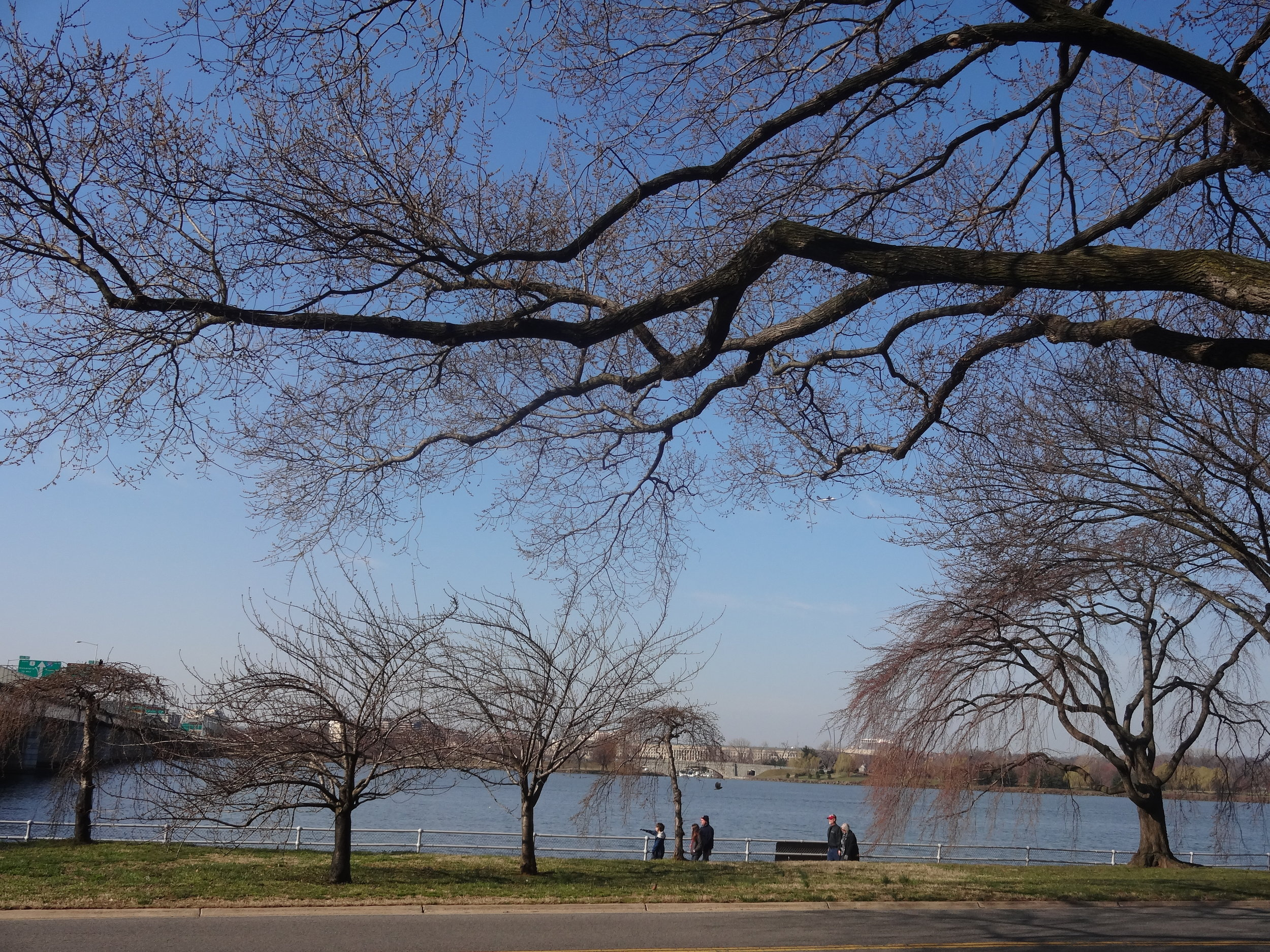 Cherry blossoms are yet to bloom. | Washington, DC 2013