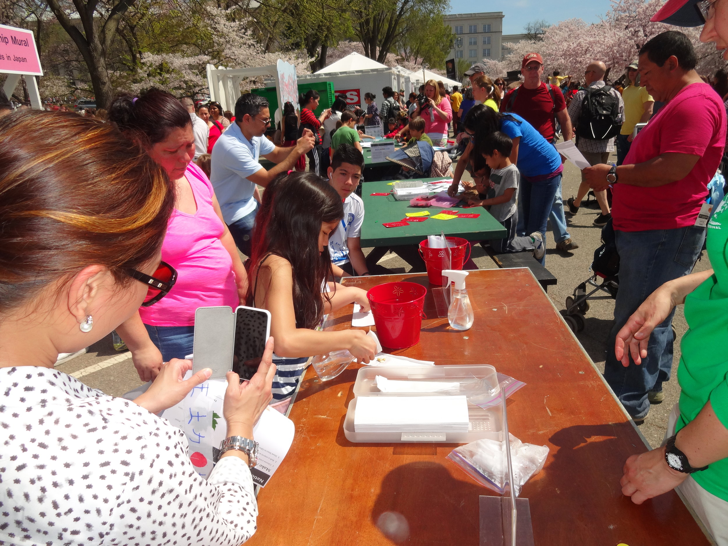 Get There Get Lost at the National Cherry Blossoms Festival 2014