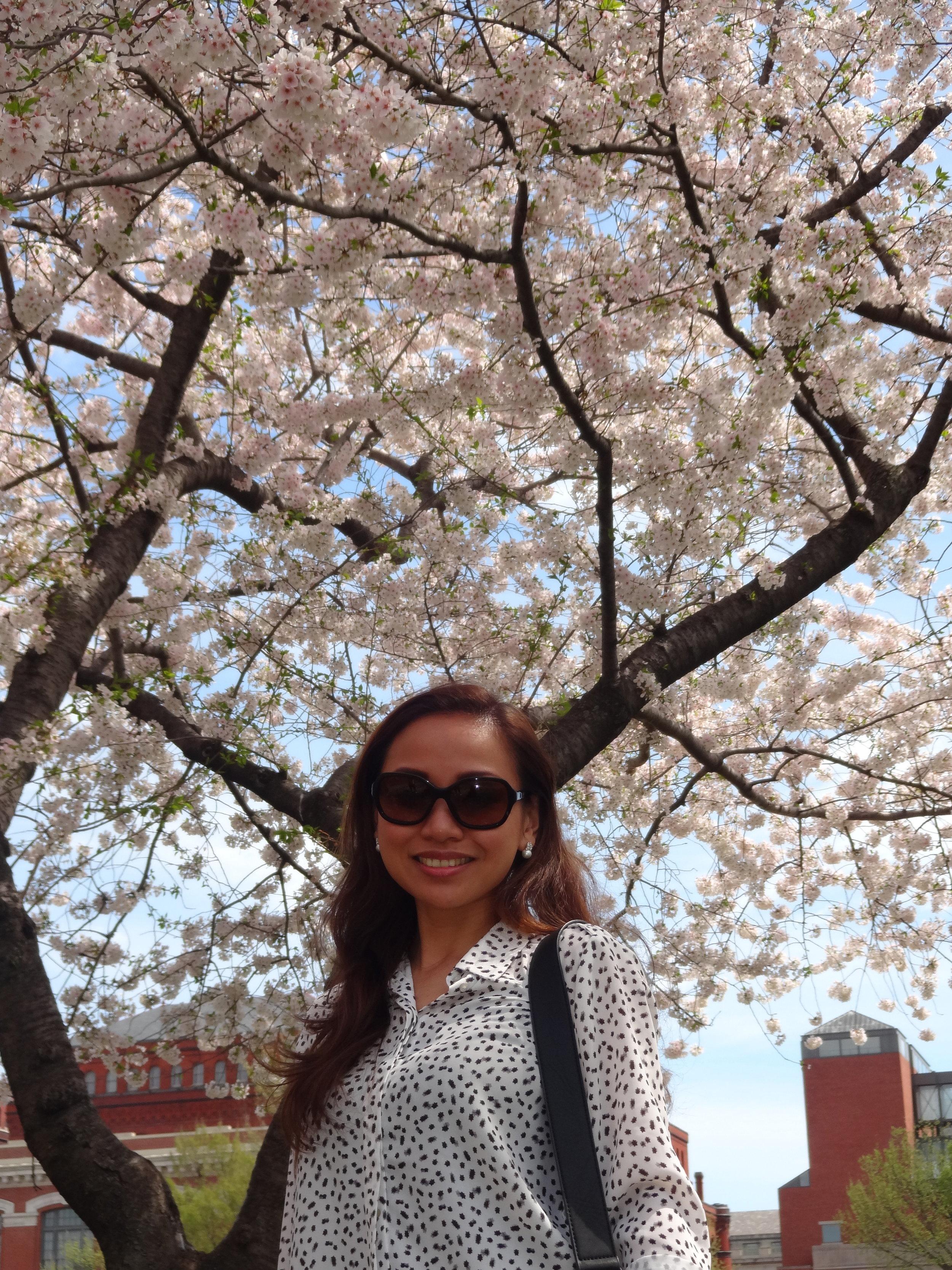 Underneath the sakura trees