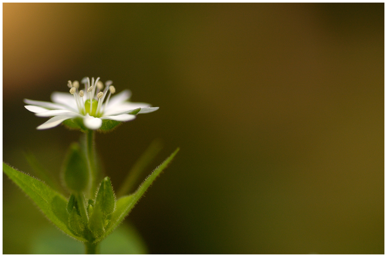 DLNY_0032_white_flower.jpg