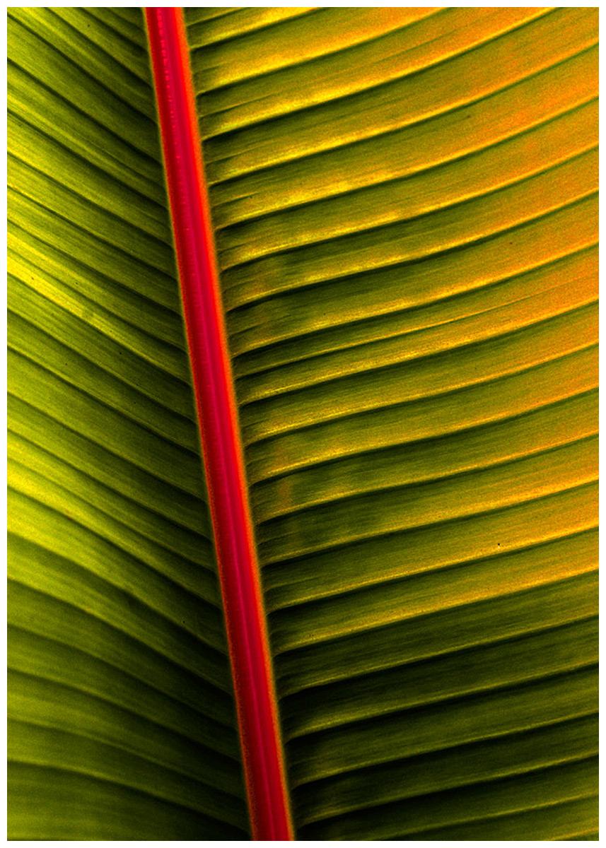 DNYC_3527_palm_new-2.jpg