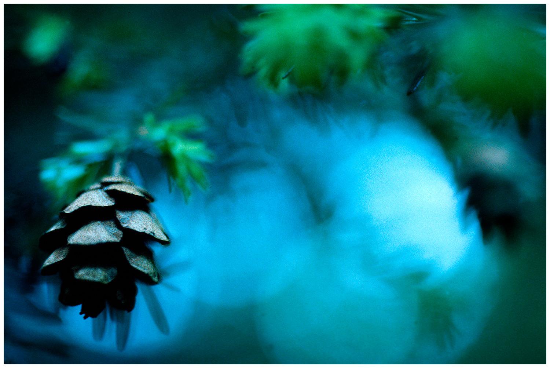 pinecone1.jpg