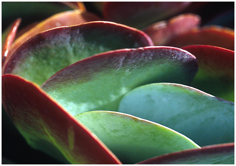 succulent_for a.jpg