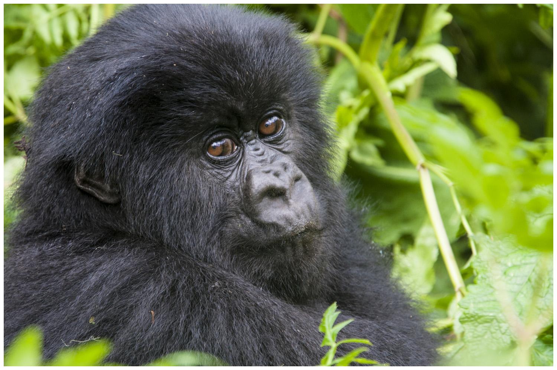 aoc-rwanda--3.jpg