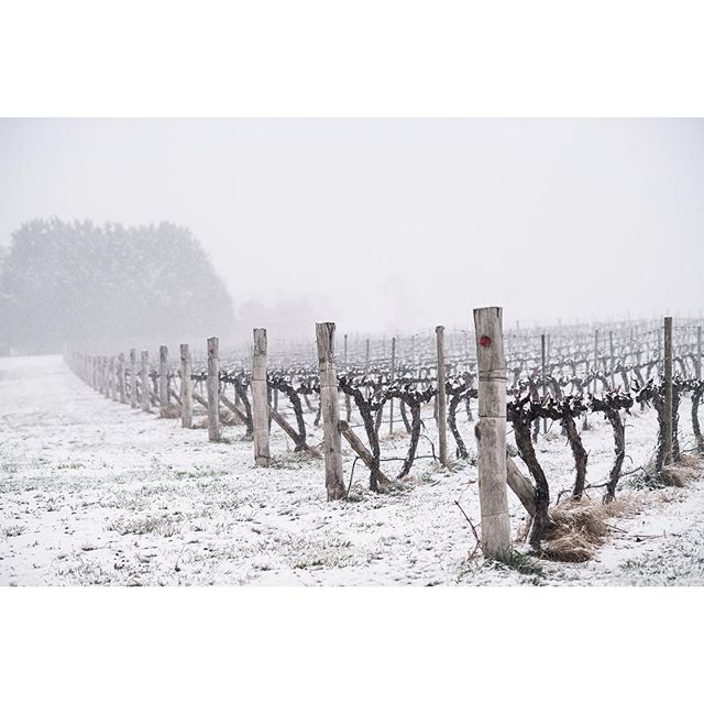 Hard to believe our countryside had a blanket of snow this time last weekend ⛄️ . . . . #coolclimatewines #orange360_allyearround #orange360 #visit_orange #visitorange #iloveaustralia #gtwinemag #gtwine #destinationnsw #tourismnsw #unearthcentralnsw