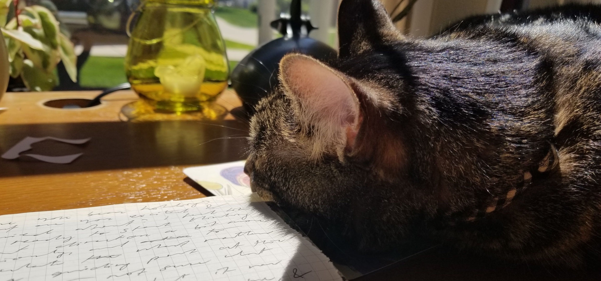 Vincent the cat lounging in a sunbeam on my studio table, on top of a letter received from a dear friend