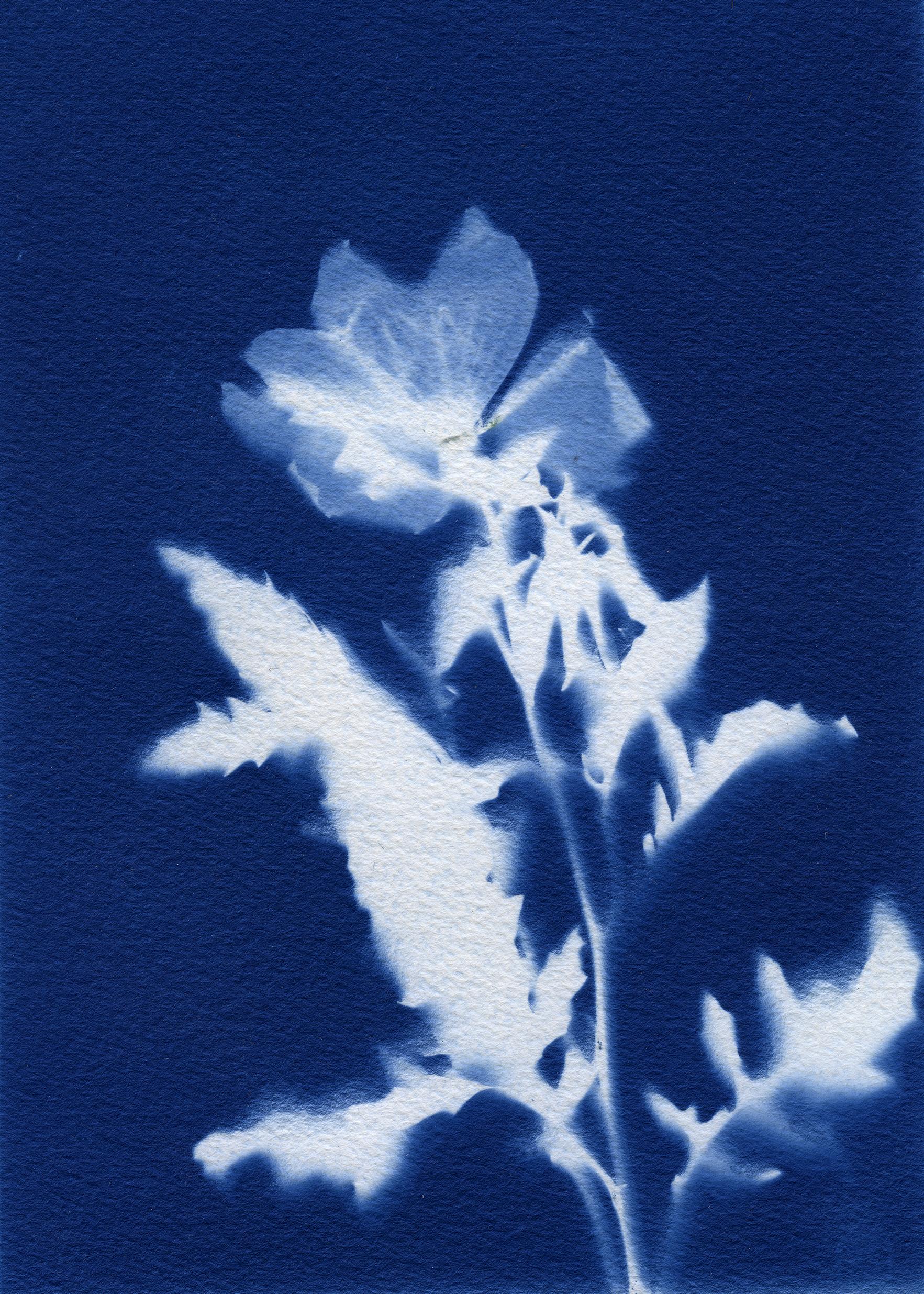 cyanotypes006_pp.jpg
