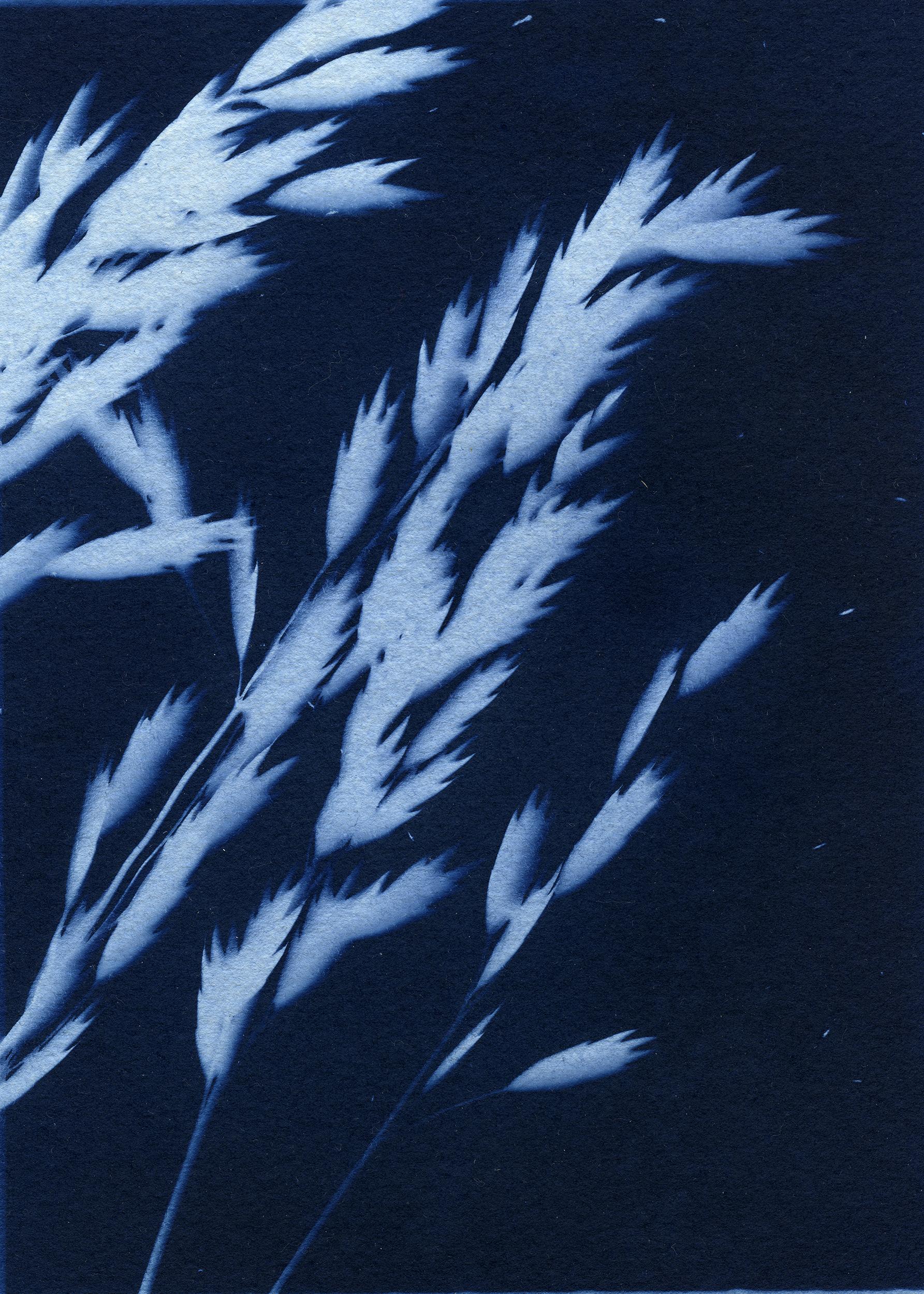 cyanotypes009_pp.jpg