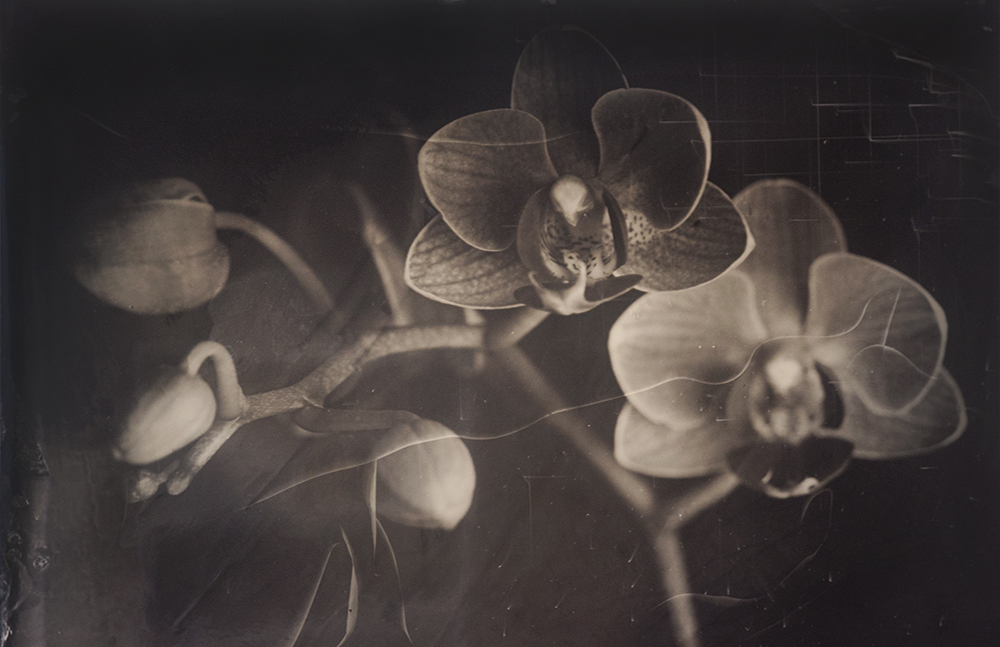 Orchid Edited.jpg