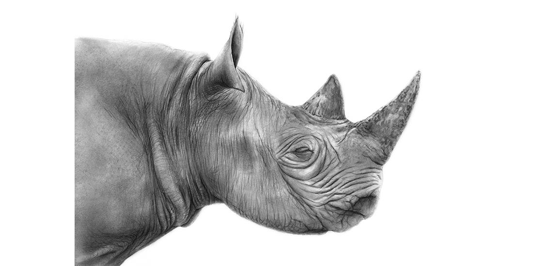 Andrew Howells_Black Rhino