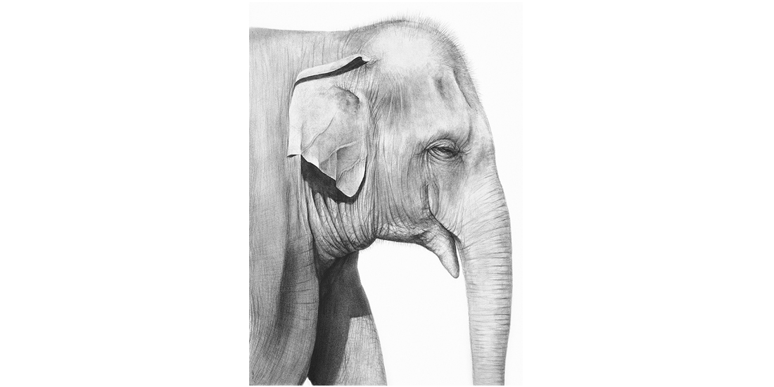 Andrew Howells_Asian Elephant Profile