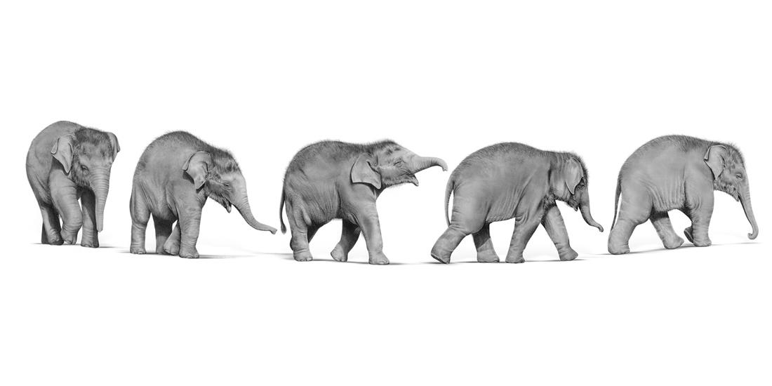 Andrew Howells_Baby Elephant March