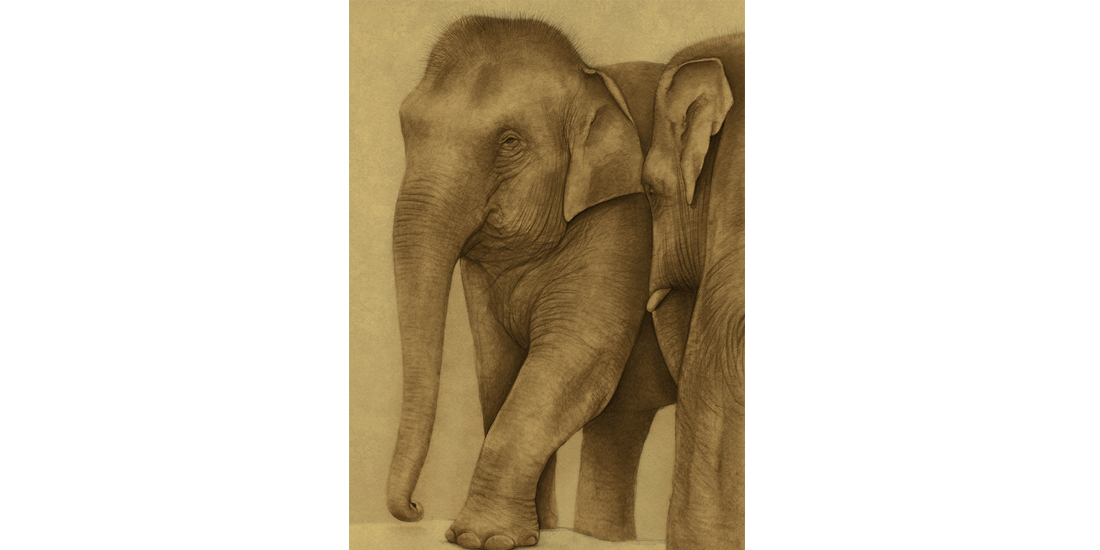 Andrew Howells_Asian Elephant