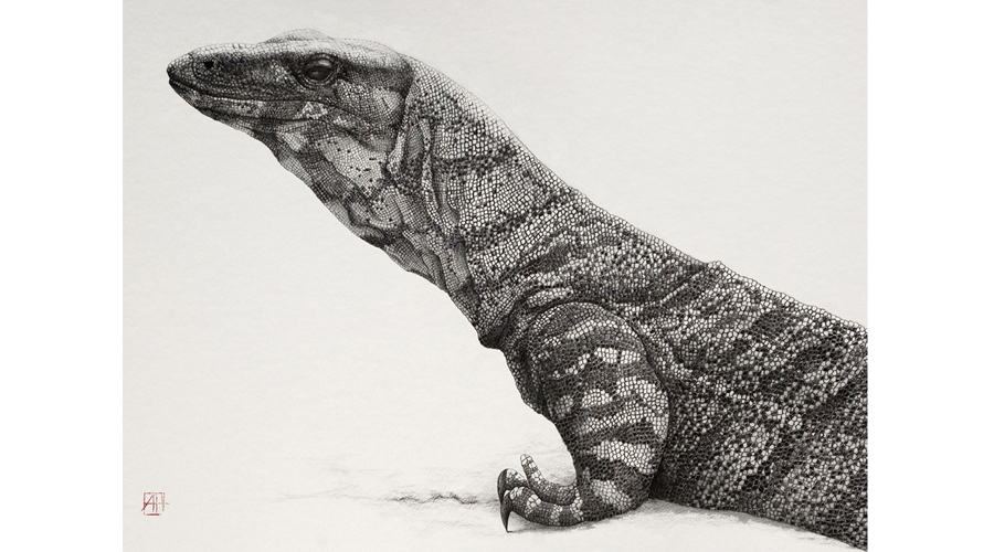 Andrew Howells_Lace Monitor