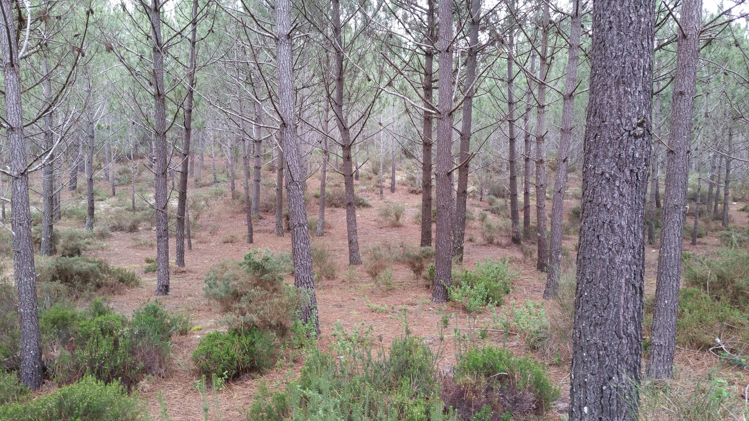il bosco nelle vicinanze di Sao Pedro de Moel