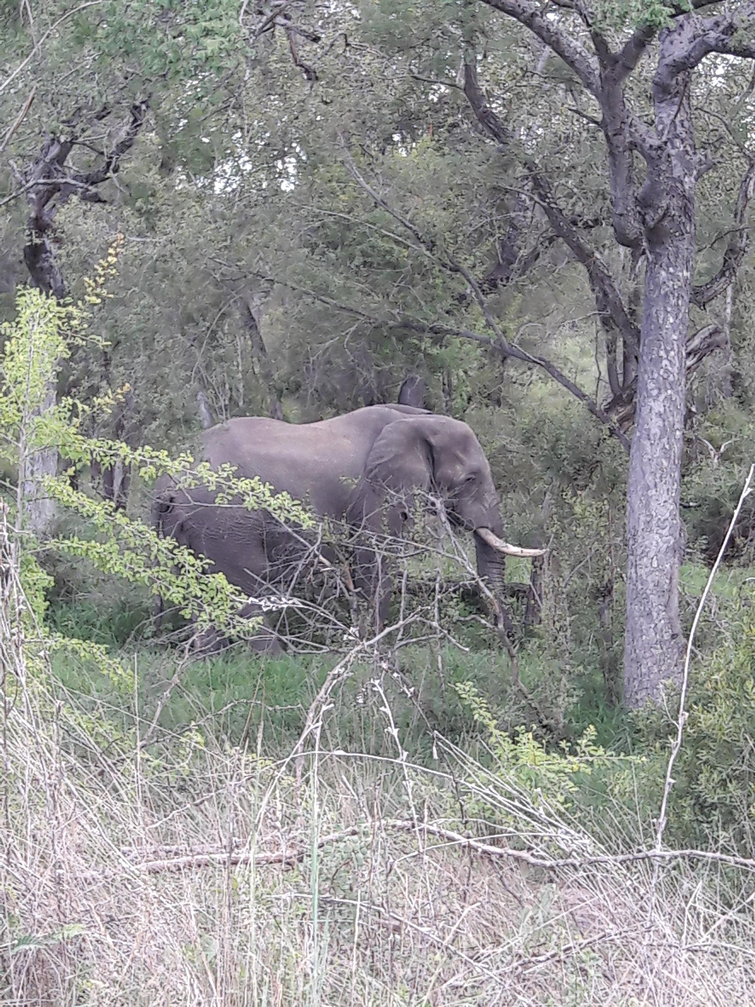 Elefante...