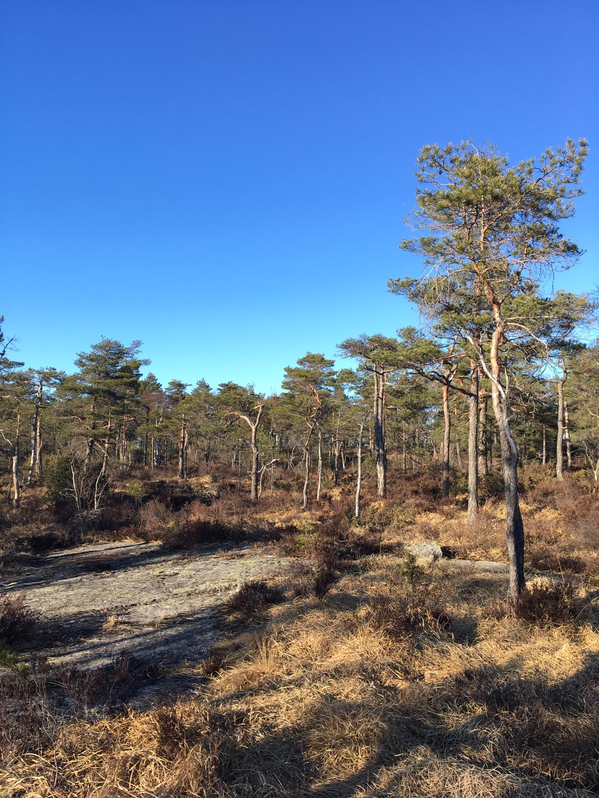 Høiåsmarka, il bosco appena fuori casa! ;-)