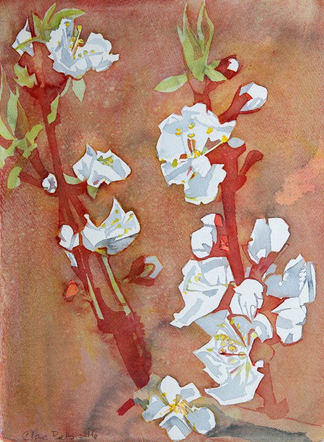 1-greengage-blossom-2016.jpg