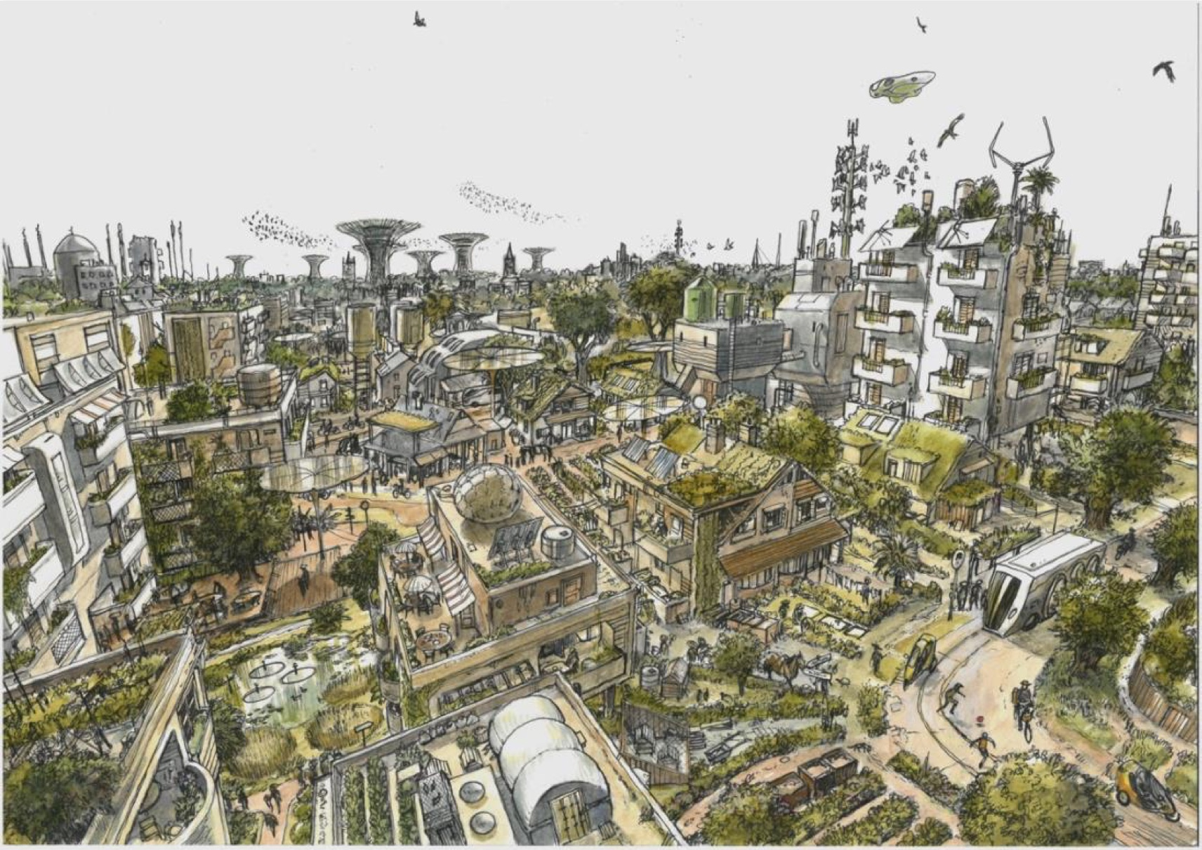 A CIVIC PLAN FOR A CLIMATE EMERGENCY -