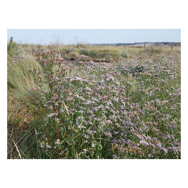 The freshest air I've smelt for  years and sea asters for miles...