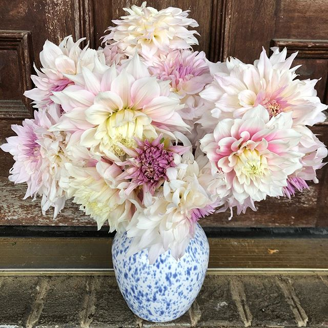 When the first frost is later than usual... well, the picture tells the story better than anything we could say.  #farmerflorist #rightfieldfarm #marylandgrownflowers #slowflowers #dahlias