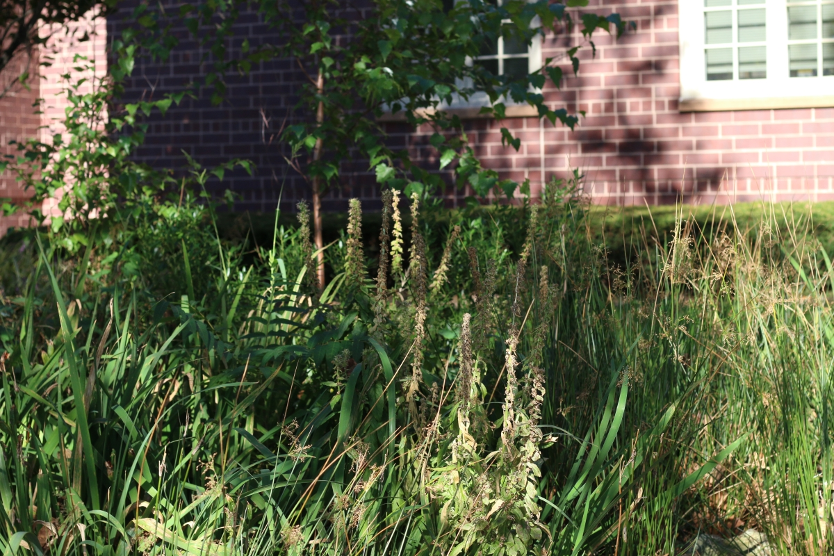 Considering all of the benefits that rain gardens bring, and that rain gardens are virtually maintenance free, it's no wonder why they seem to be sprouting up everywhere!
