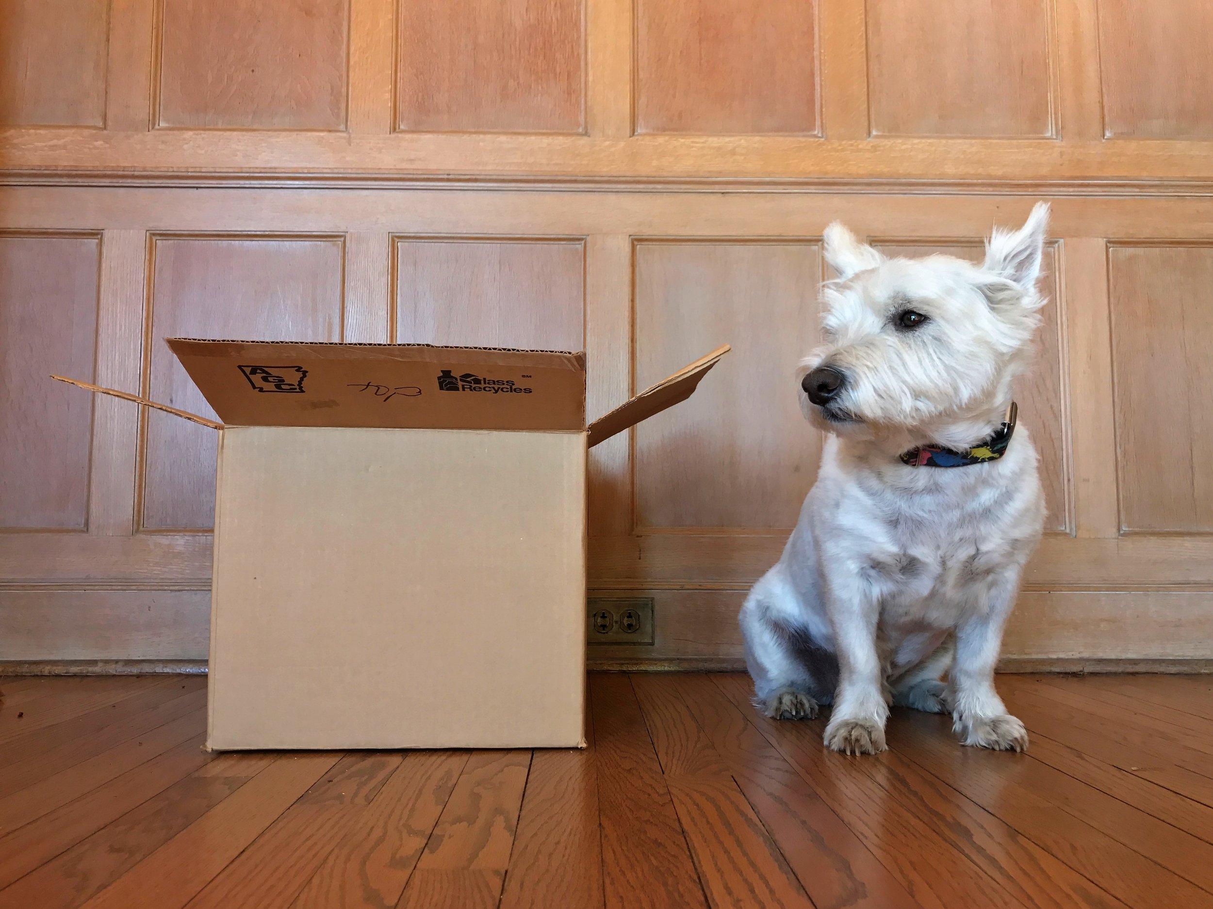 Chauncey contemplates the purpose of a box.