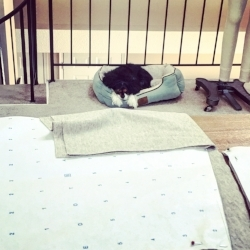 Knieriem Designs Studio Dog