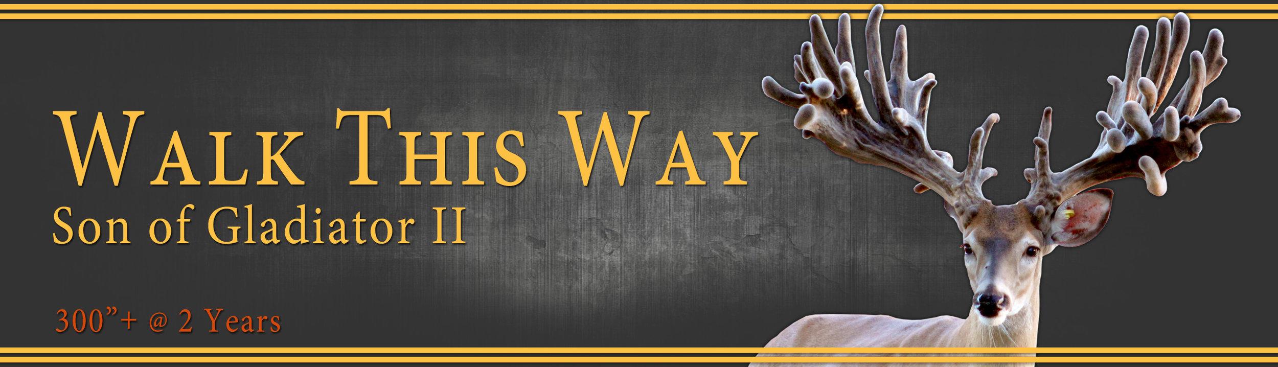 walk this way.jpg