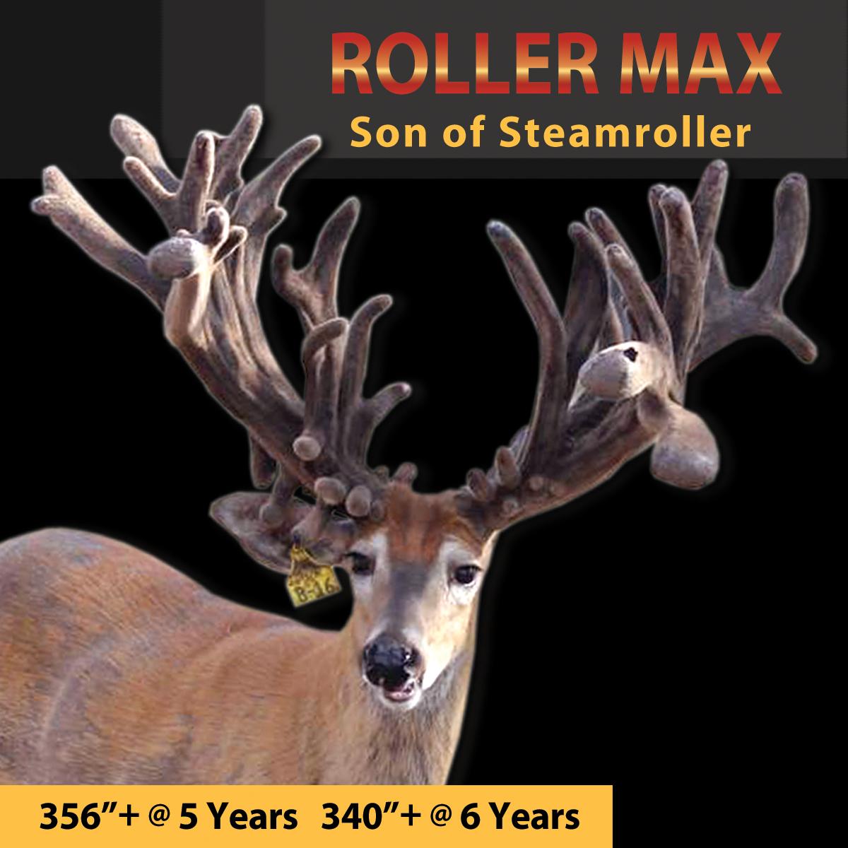 roller max.jpg