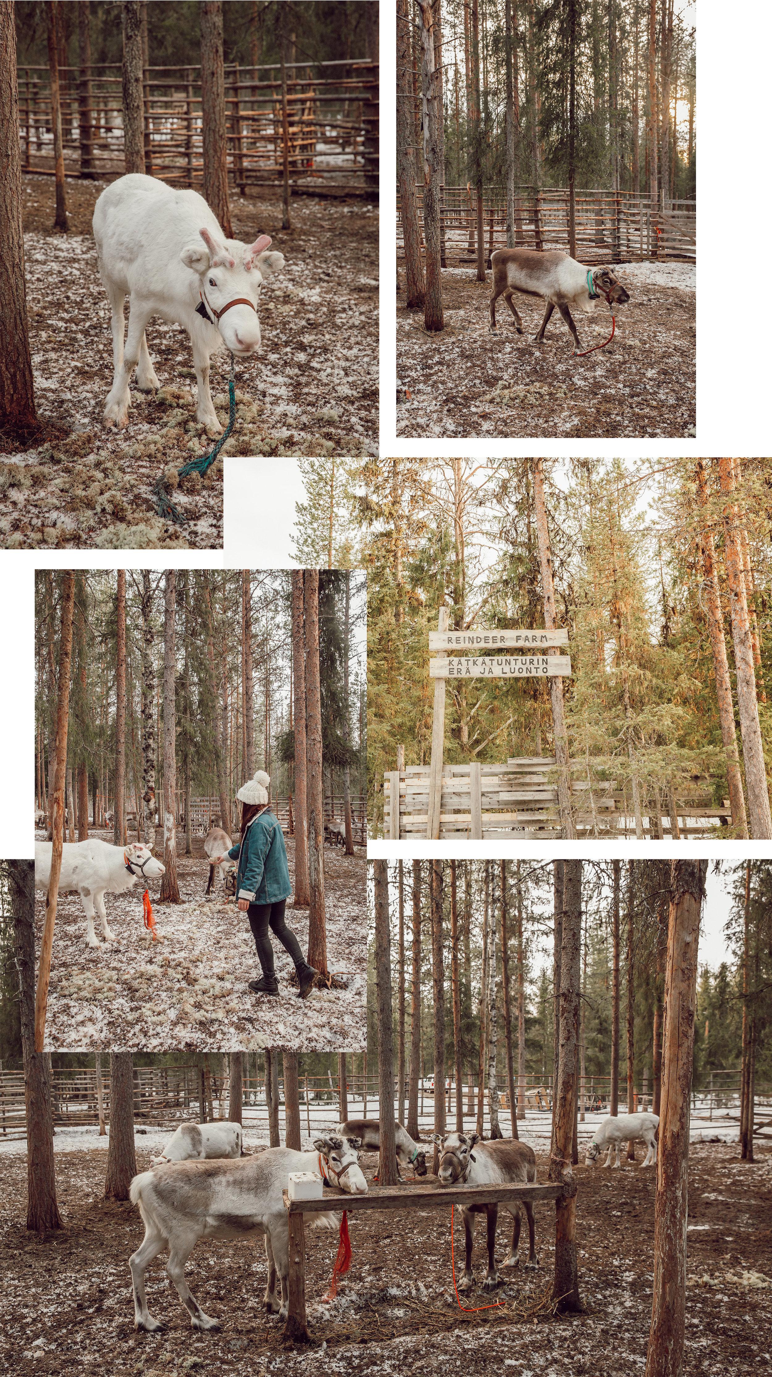 finland2blog3.jpg