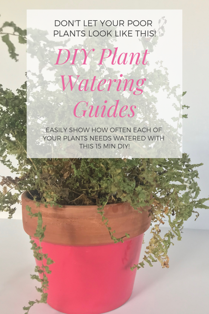 DIY Plant Watering Guides | Peonies and Cream