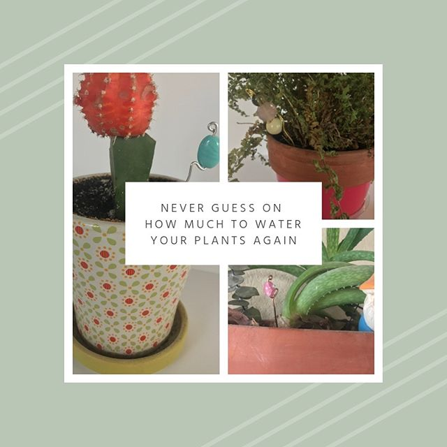New blog post!⁣👩🏻‍💻⠀ ⁣⠀ 🌱I made these 5 min plant guides to make it easy for you and everyone in your home to remember how much water your little green buddies need!⁣🌿⠀ ⁣⠀ 🔗Check out the link in the bio to read the idea behind these pretty little accessories and a super easy tutorial!⁣🔗⠀ ⁣⠀ ⁣⠀ ⁣⠀ ⁣⠀ #peoniesandcream #Blogpost ⁣⠀ #blog #bloglife #blogger #plants #plantlady #plantwatering #plantdiy #gardendiy #5mindiy #5mincraft #plantcraft