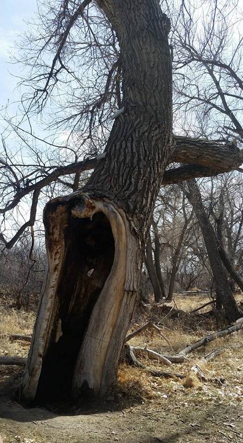 This tree emulates  The Thunder Tree  from Bob Pyle's novel.