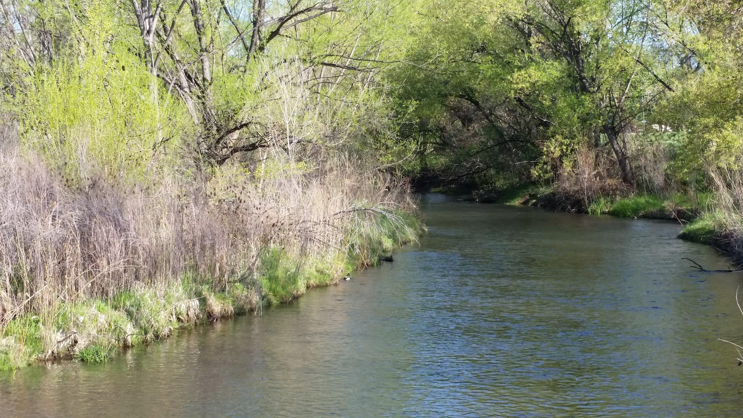 Bear Creek 6.jpg