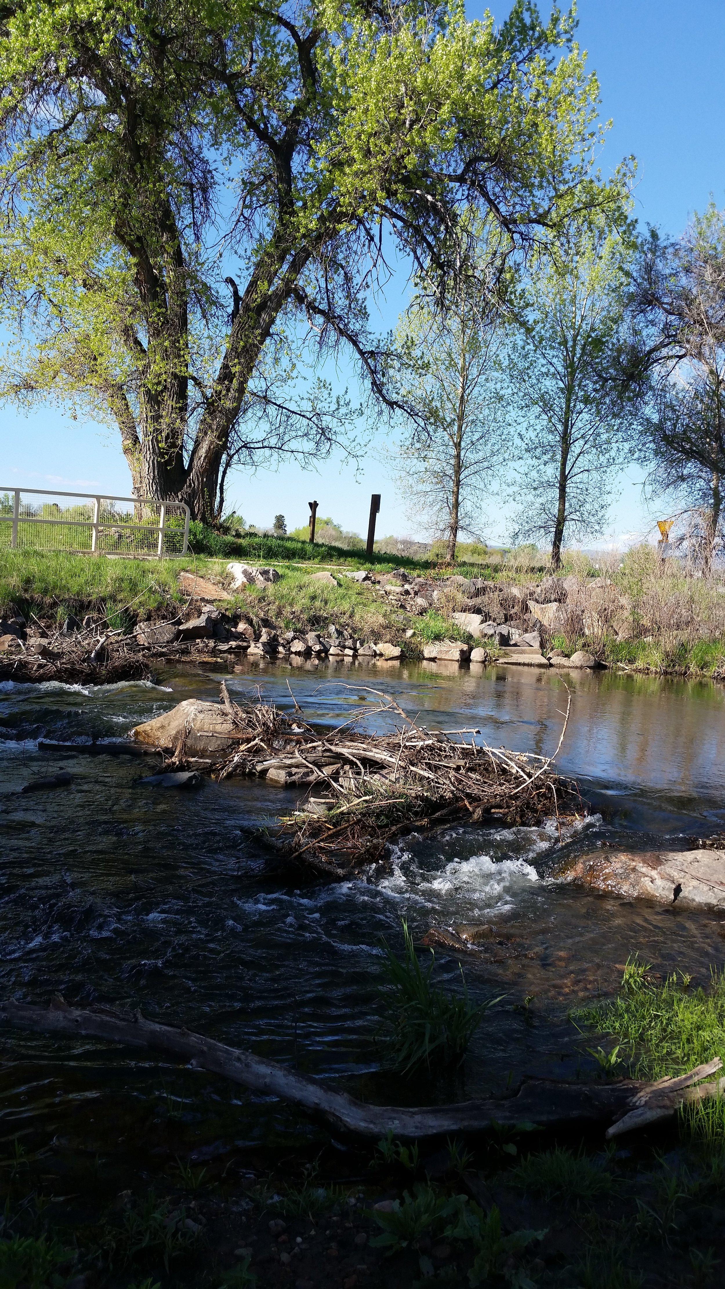 Bear Creek 7.jpg