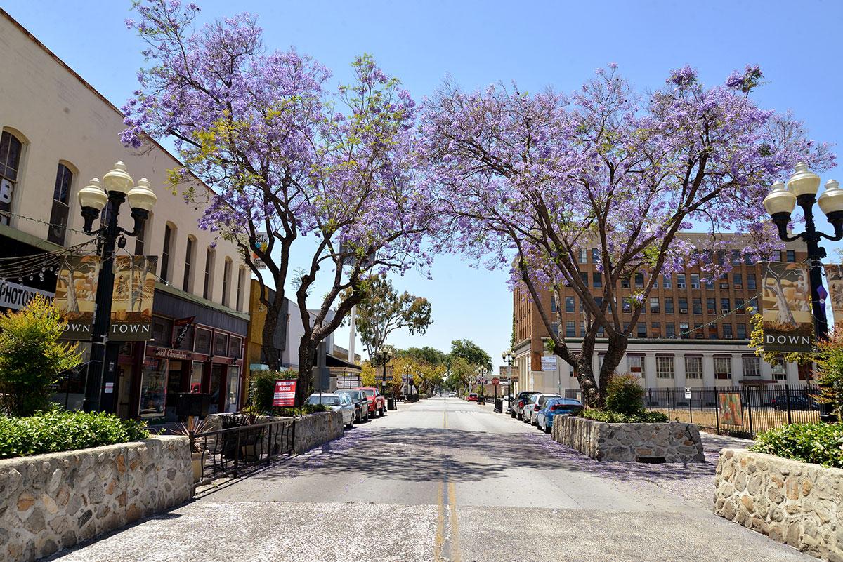2nd-St.-Jacaranda-DTP-.jpg