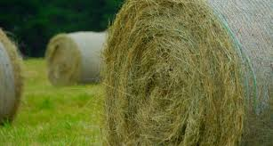 round_hay_bale.jpg