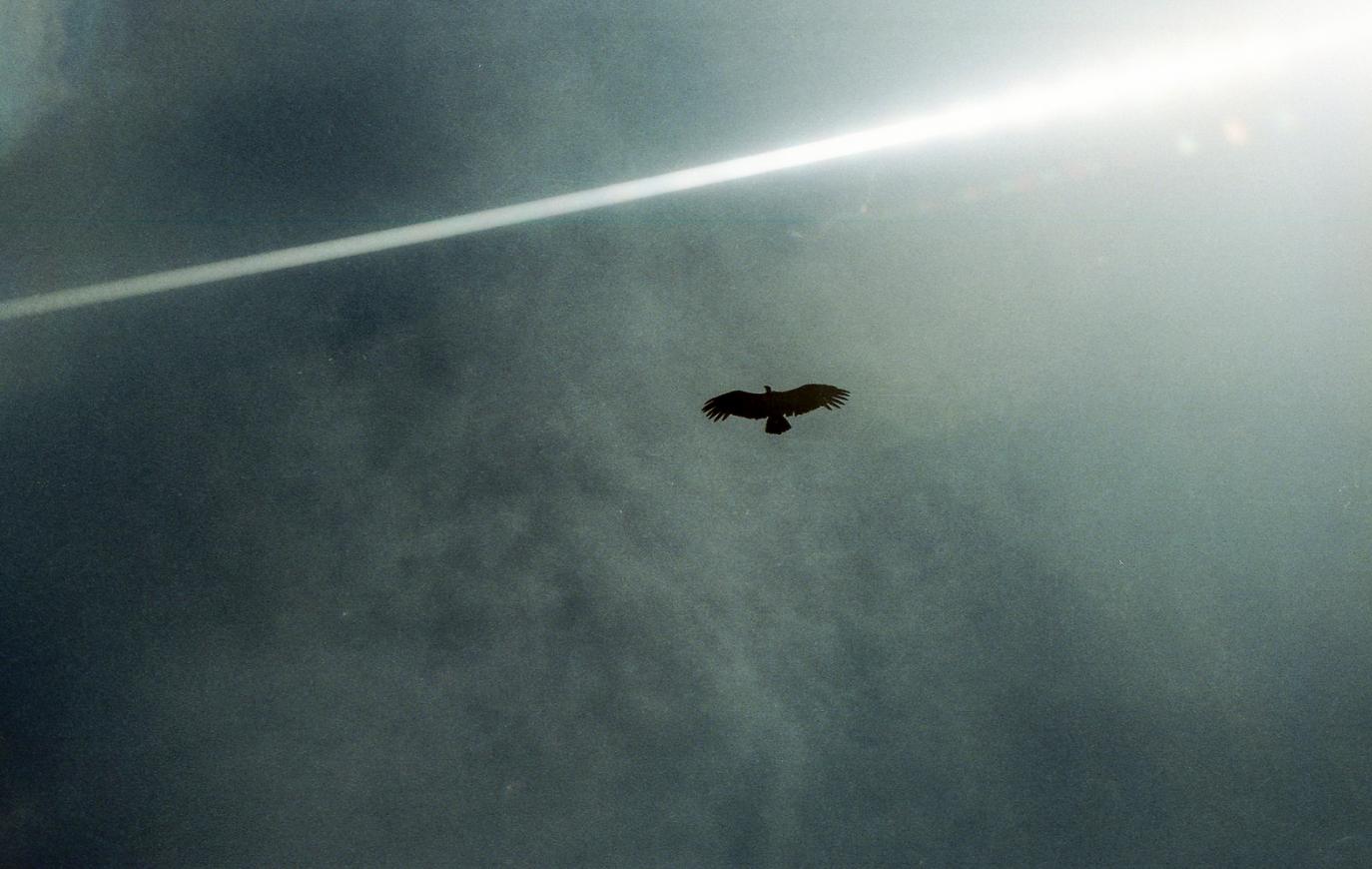 """""""Condor-dos-andes, o voo mais deslumbrante que já vi"""" by  Tuane Eggers"""