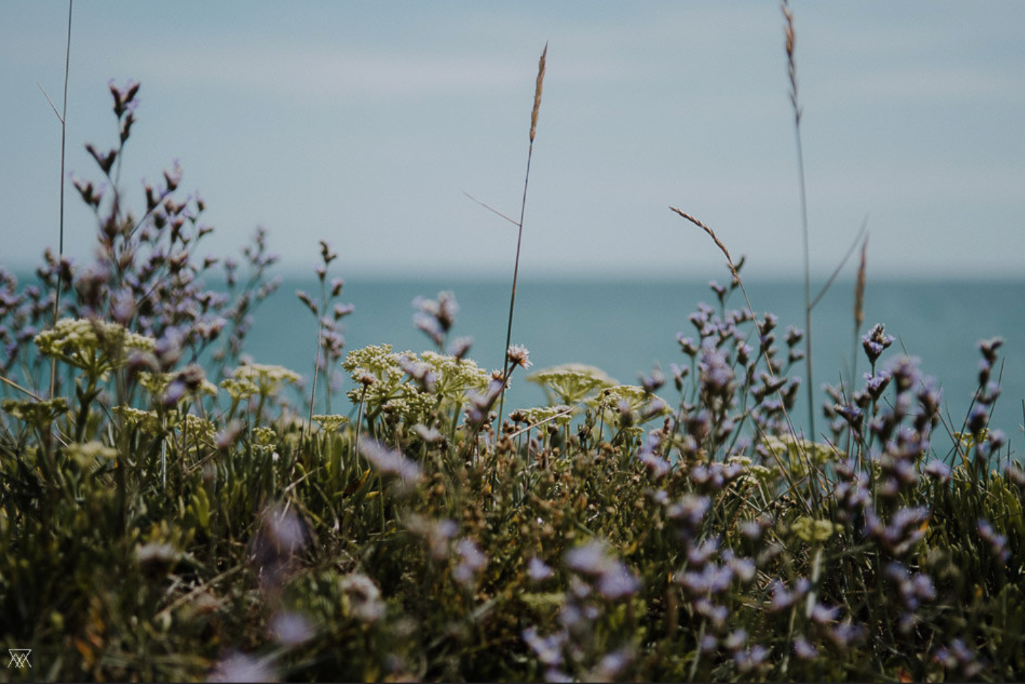 """Wild Flowers / Saltwater"" by  Milie Del"