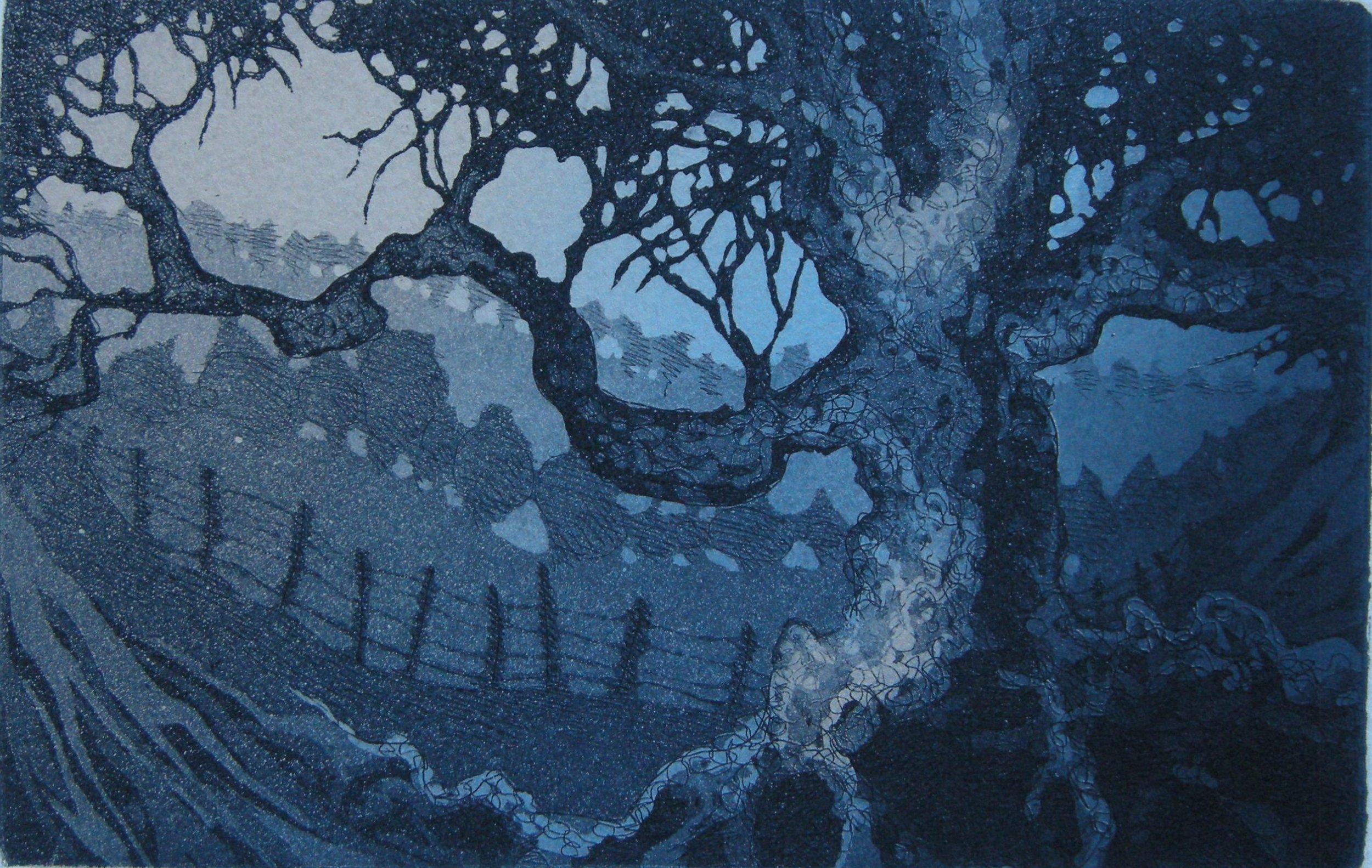 L Gnarled tree.JPG