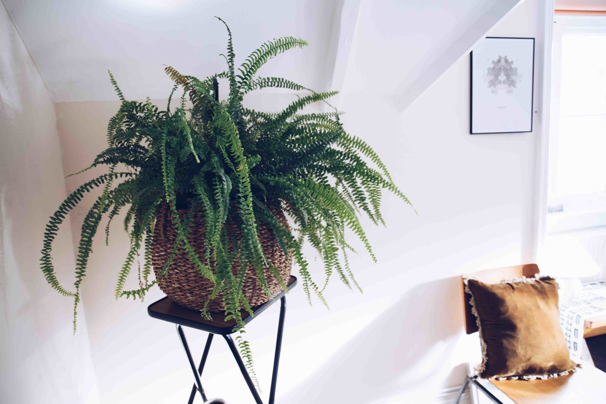 5 Mega Benefits Of Plants In The Office - Moore &Moore Living