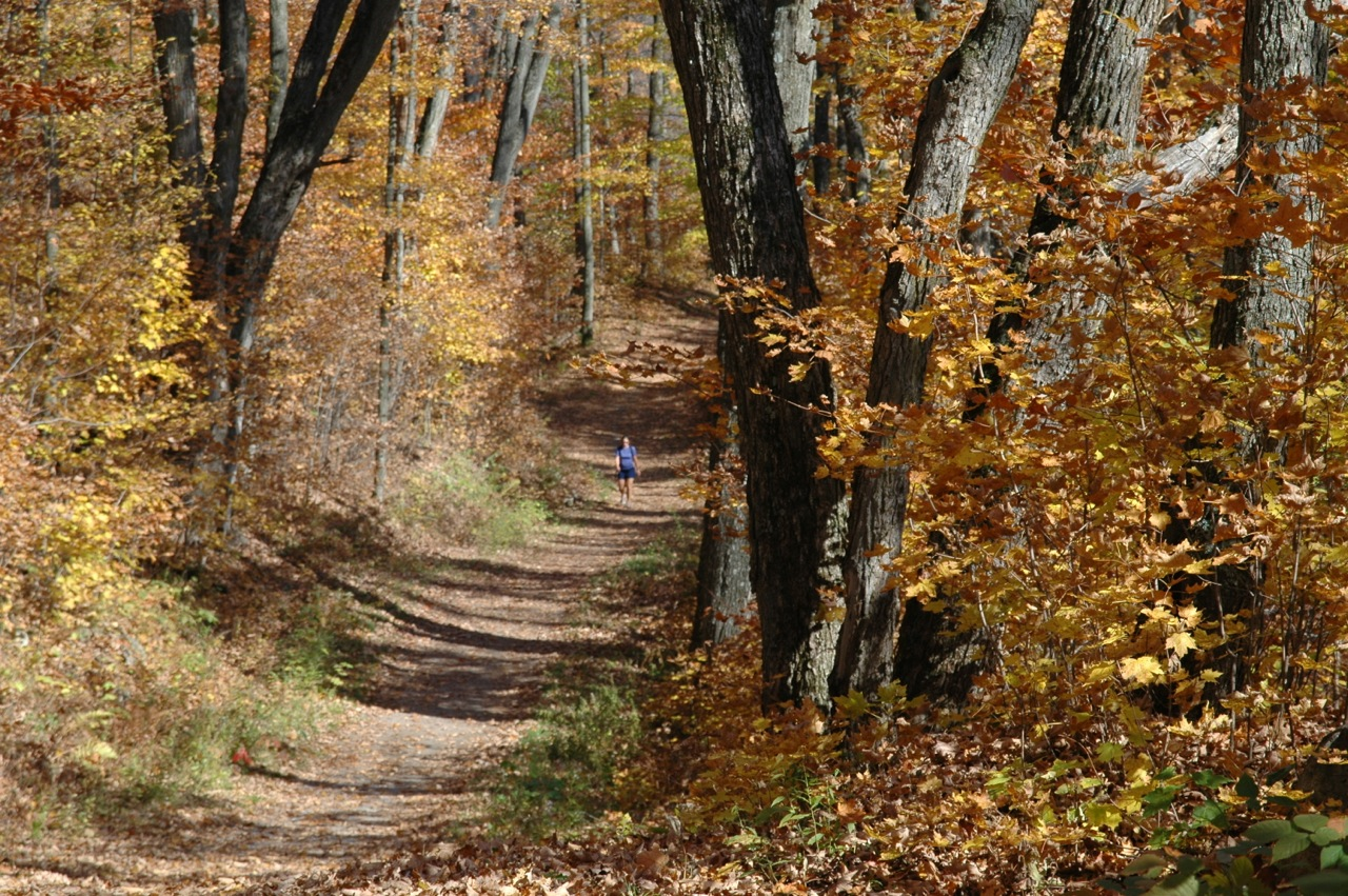 An easy autumn stroll in Gatineau Park