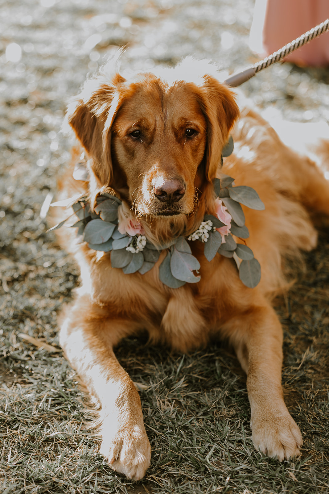 Temecula Wedding Dog.jpg