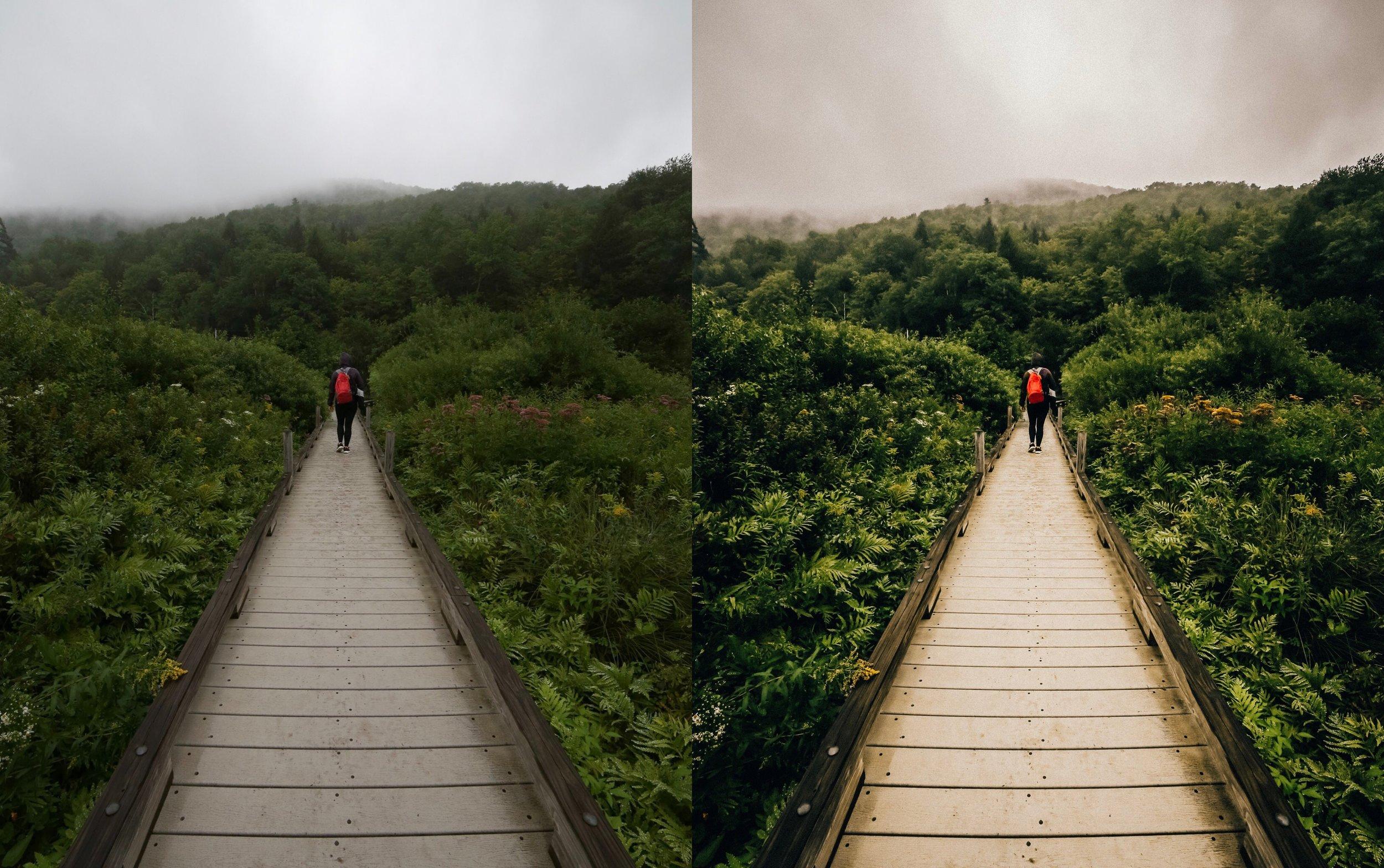 Bleached Trail