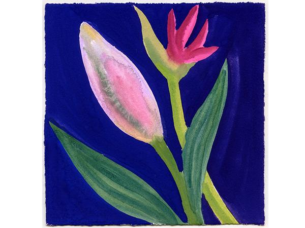 BANNER - Nerys Johnson, Stargazer Lily Bud and Nerine Bud, Gouache on paper, 15.5 x 15cm.jpg