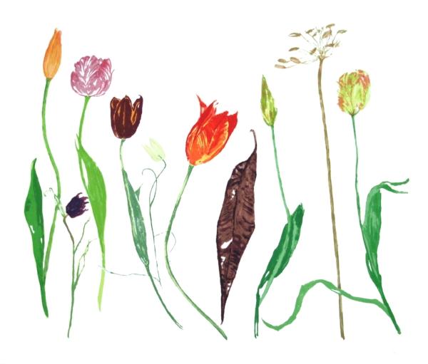Tulips  Screenprint, edition of 80 67 x 57cm