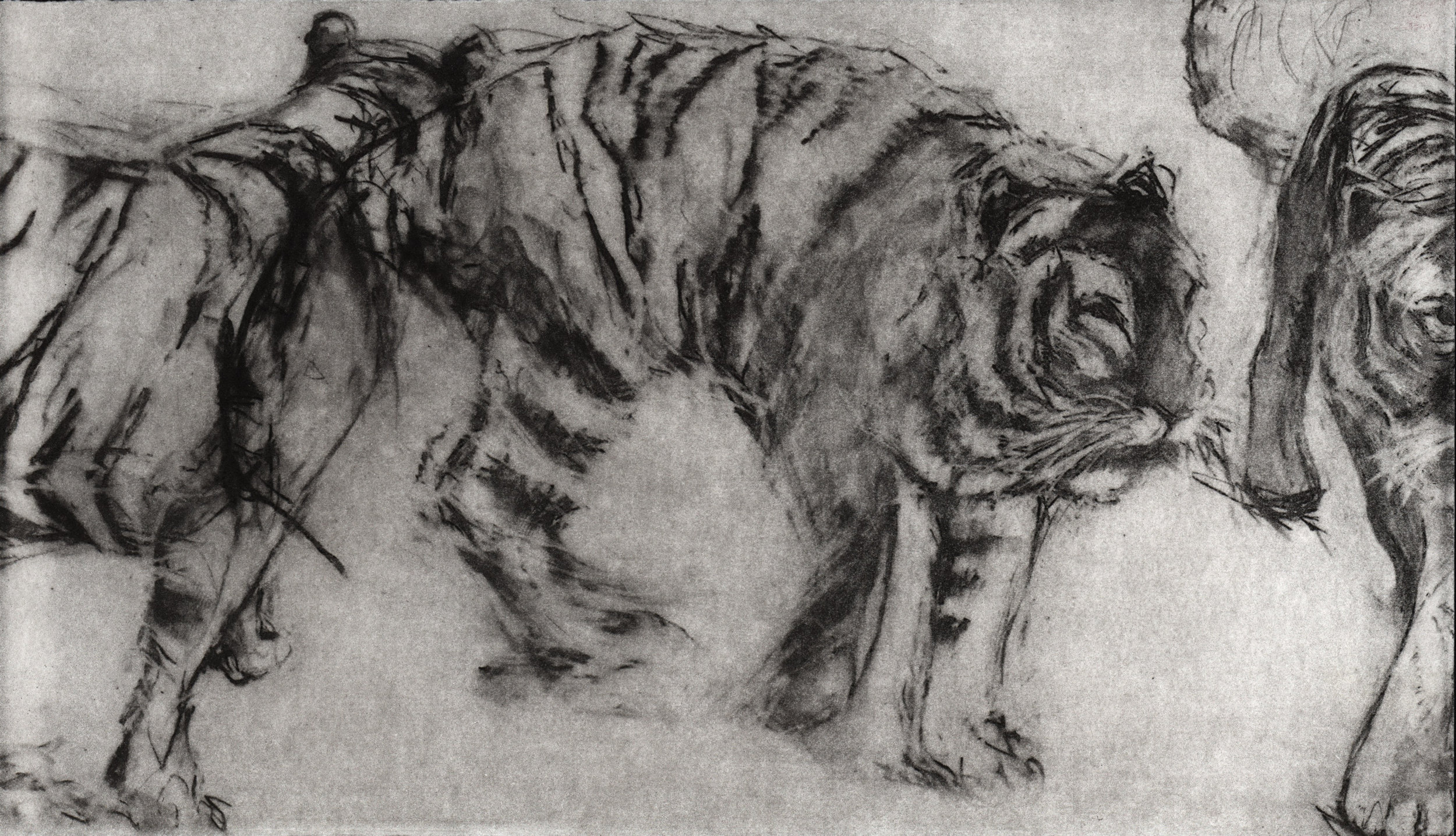Pacing Tiger III  (detail), Photopolymer etching, Louise Pallister